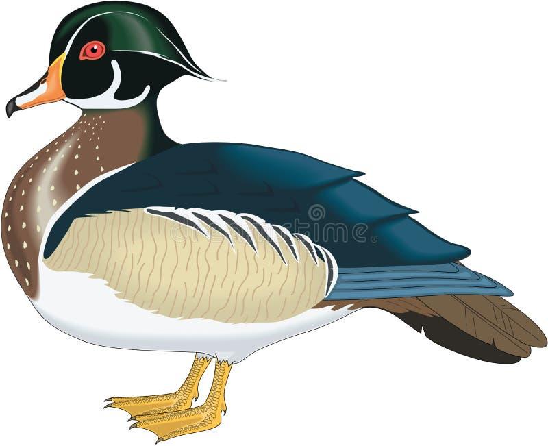 Houten Duck Illustration stock illustratie