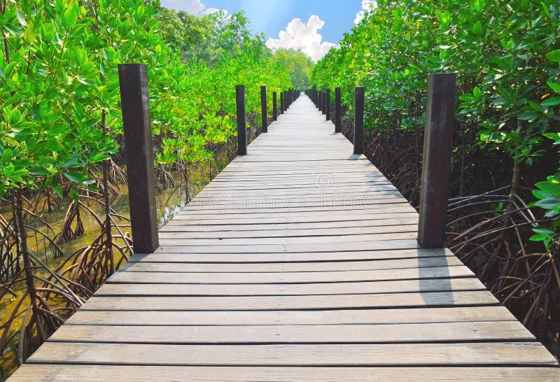 Houten gangen in mangrovebos stock foto's