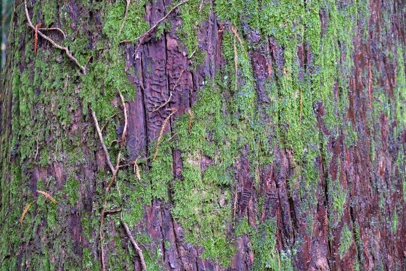 Houten geweven achtergrond met groen mos stock afbeeldingen