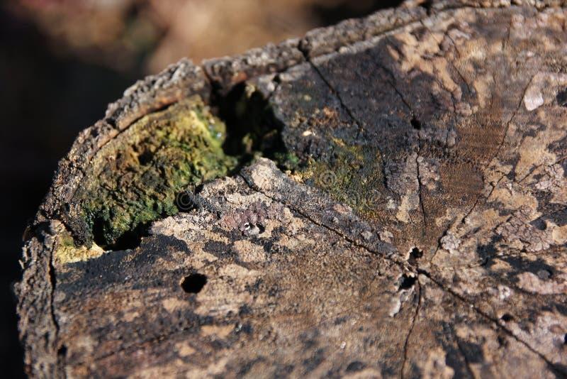 Houten geweven achtergrond met groen mos royalty-vrije stock foto