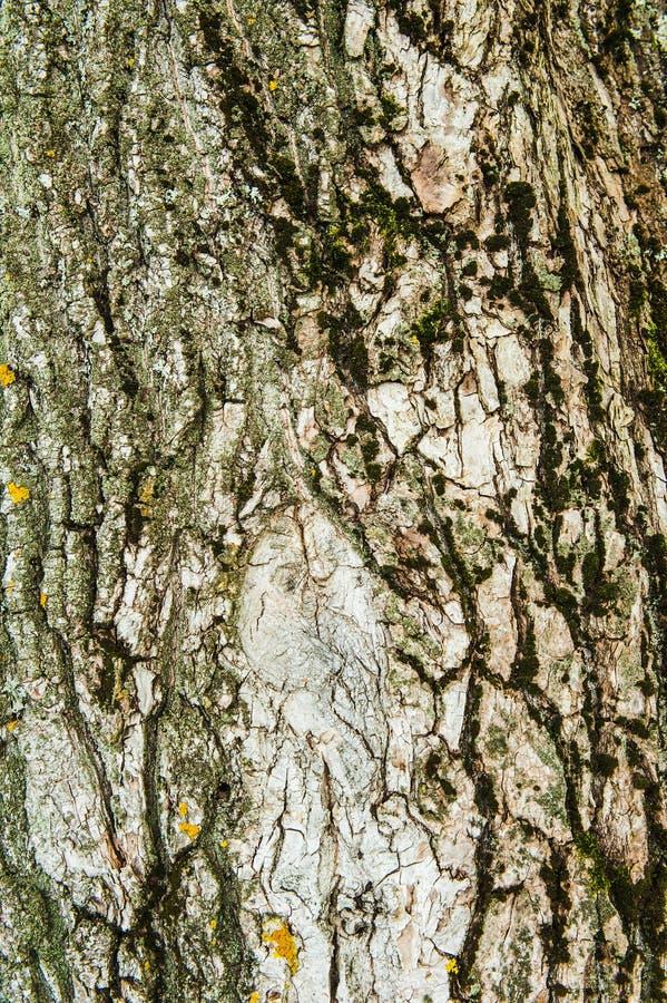 Houten geweven achtergrond met groen mos royalty-vrije stock fotografie