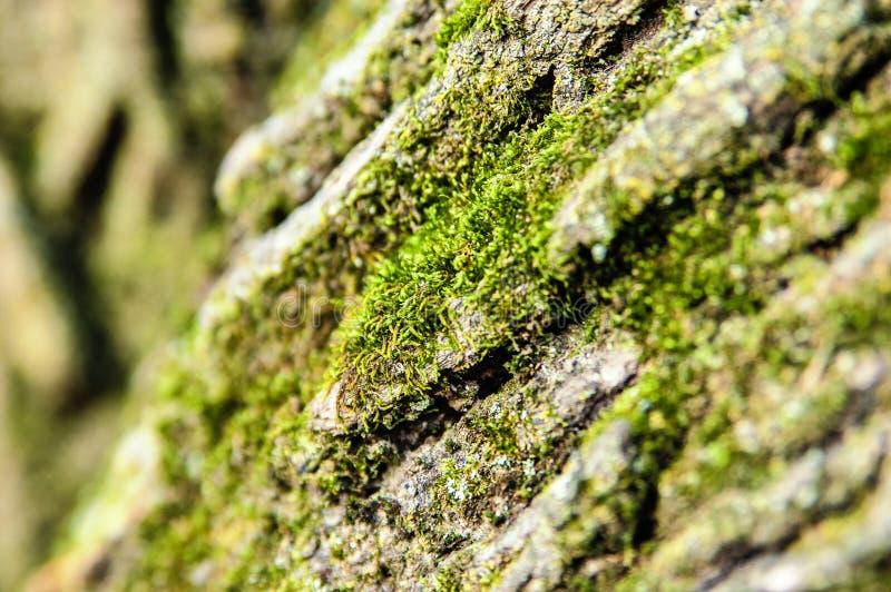 Houten geweven achtergrond met groen mos over royalty-vrije stock fotografie