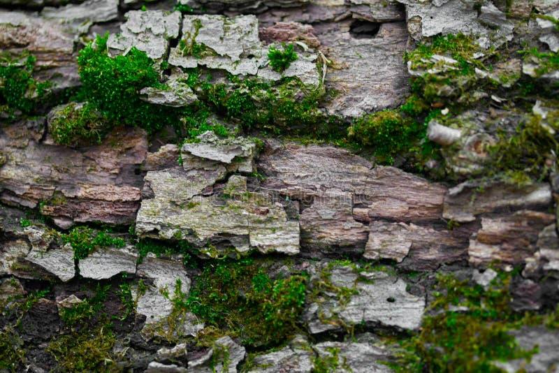 Houten geweven achtergrond met groene mostextuur stock afbeelding