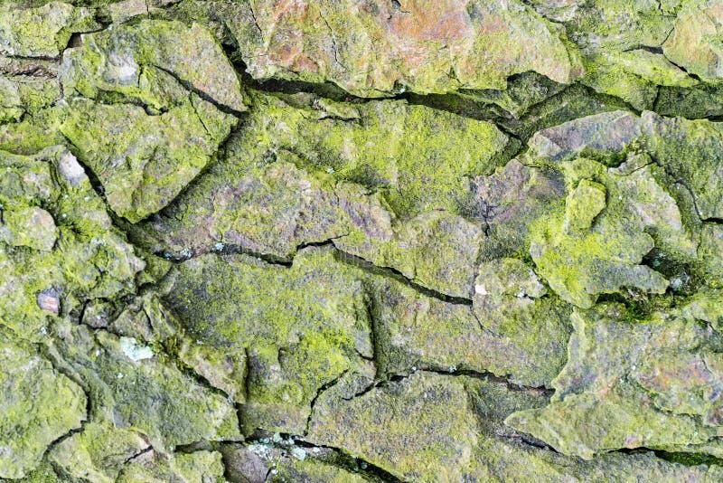Houten geweven met groen mos royalty-vrije stock afbeeldingen