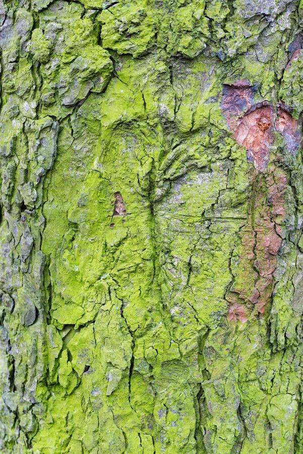 Houten geweven met groen mos stock afbeelding