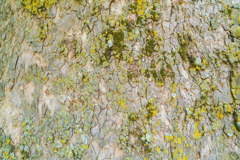 Houten geweven met groen mos stock foto's