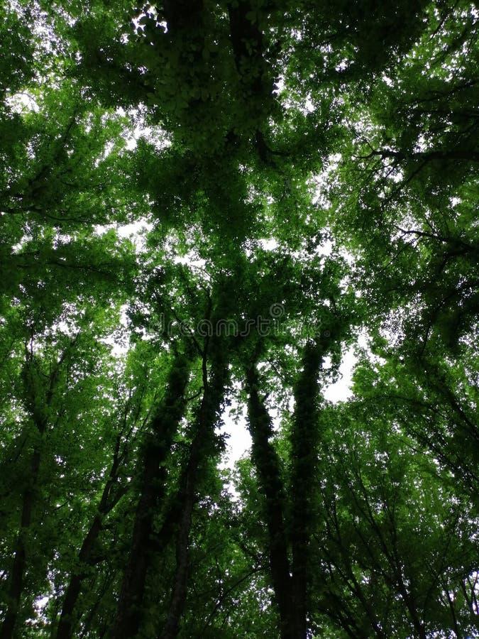 Houten groene schaduwen en terwijl licht royalty-vrije stock foto