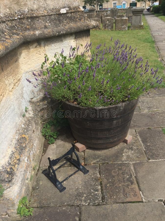 Houten half die vat als planter buiten kerk met lavendelinstallatie wordt gebruikt royalty-vrije stock foto