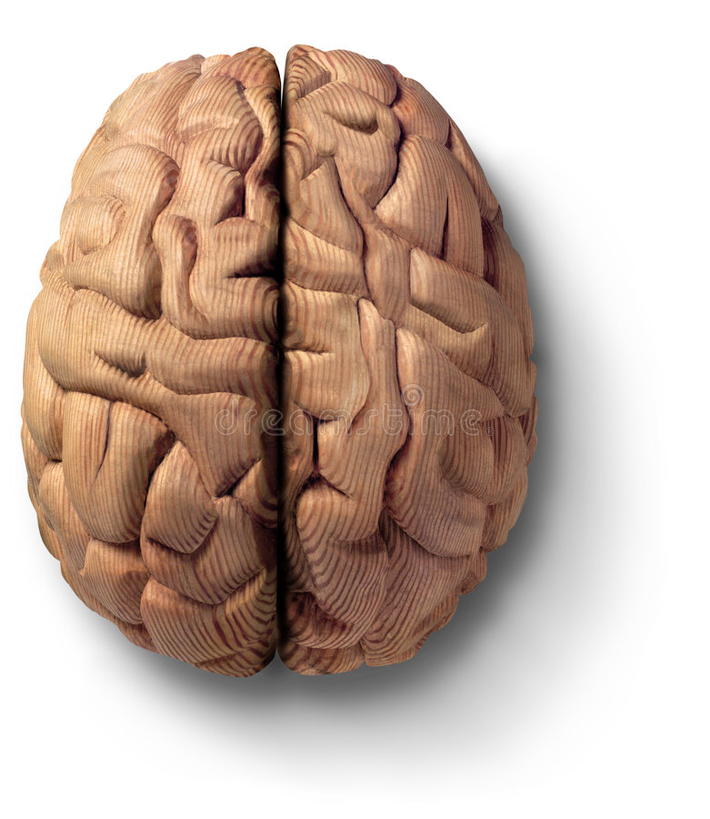 Houten hersenen stock foto