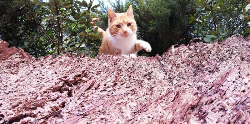 Houten kat stock afbeelding