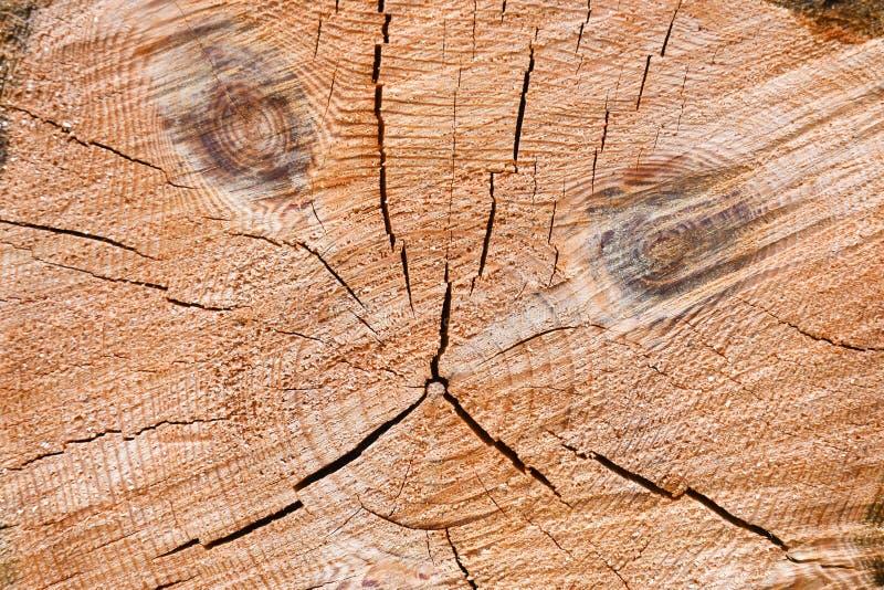 Houten korreltextuur als achtergrond Achtergrond van de besnoeiings de houten textuur Dwarsdoorsnede royalty-vrije stock afbeelding