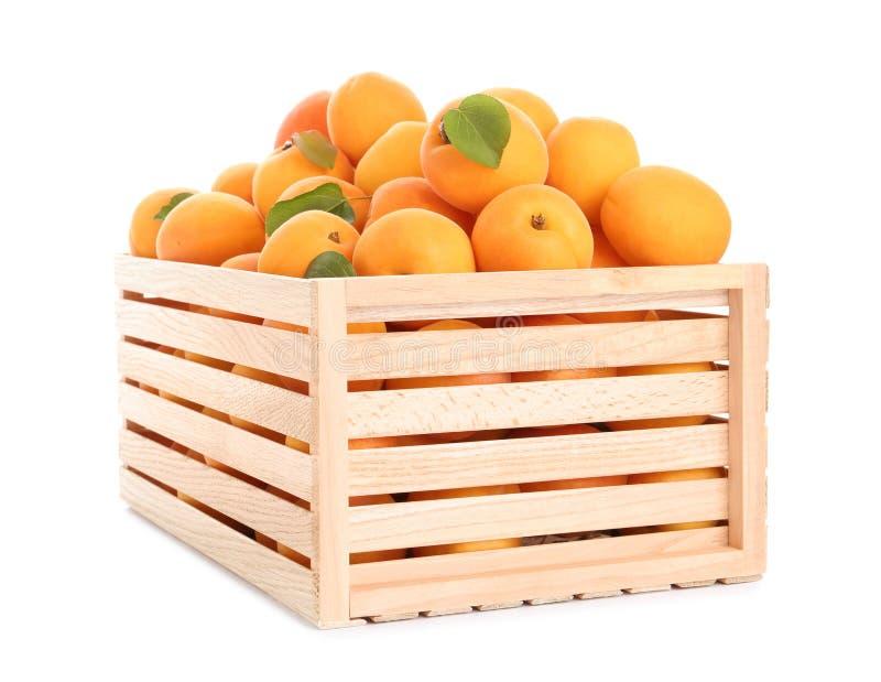 Houten krat van heerlijke rijpe zoete geïsoleerde abrikozen royalty-vrije stock afbeeldingen