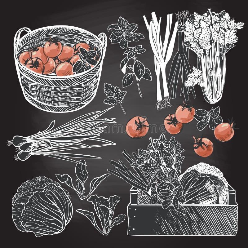 Houten krathoogtepunt van verse groenten en kruiden stock illustratie