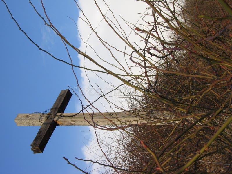 Houten kruis met struiken royalty-vrije stock foto