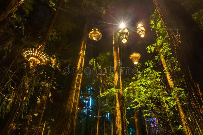Houten lantaarnslicht omhoog een Californische sequoiabos bij nacht stock foto's