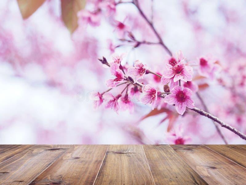 Houten lijstbovenkant over de roze bloem van kersenbloesems in volledige bloei stock afbeelding