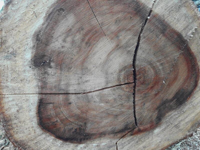 Houten logboek van een stompboom stock afbeeldingen