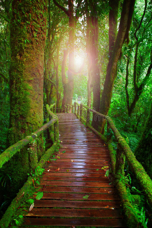 Houten manieren in het Nationale Park CH van Doi Inthanont van het bergregenwoud royalty-vrije stock fotografie