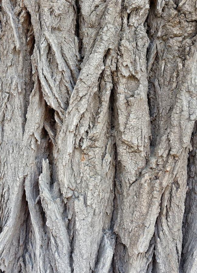 Houten houten natuurlijke boom oude textuur stock foto