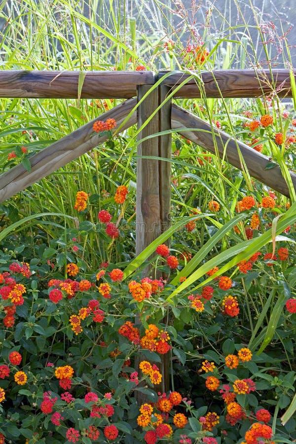 Houten omheining die door kleurrijke bloemen wordt omringd royalty-vrije stock afbeelding