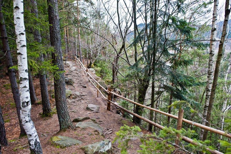 Houten omheining op flard bij nat bos in Karpatische bergen stock fotografie