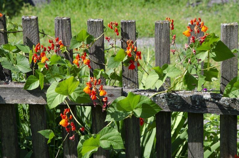 Houten omheining in tuin stock foto's