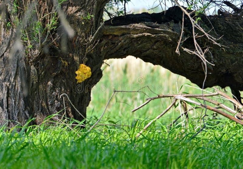 Houten paddestoelen op een boomstamboom stock afbeelding