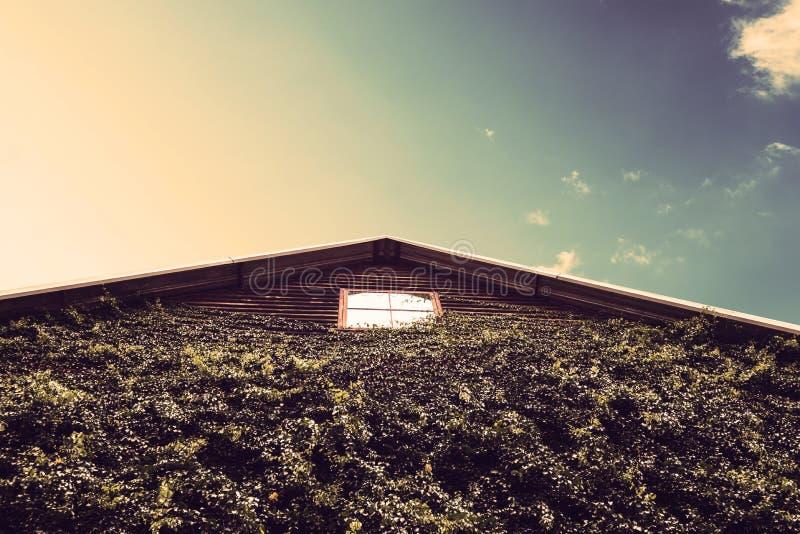 Houten pakhuis met eco vriendschappelijke groene muur met blauwe hemel in platteland stock afbeeldingen