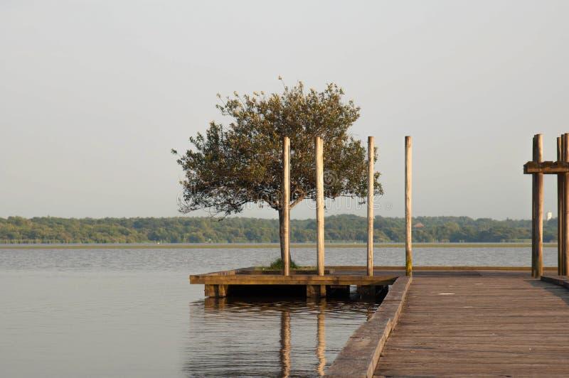 Houten pijler en boom in het Soustons-meer, de Landes royalty-vrije stock afbeelding