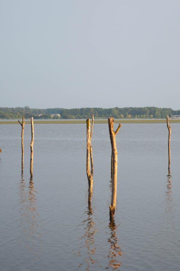 Houten pijler en boom in het Soustons-meer, de Landes stock afbeelding