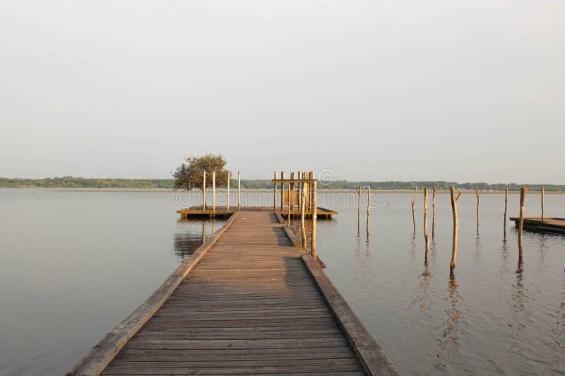 Houten pijler en boom in het Soustons-meer, de Landes royalty-vrije stock foto's