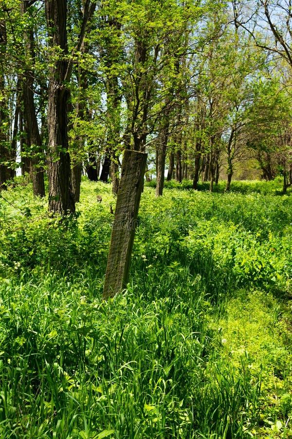 Houten post in het hout stock foto