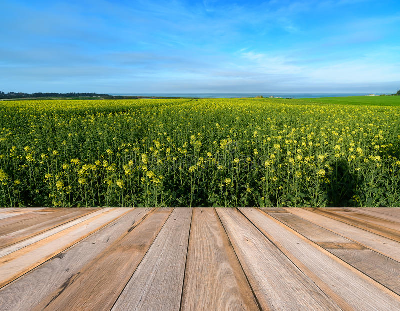 Houten raads lege lijst voor canolalandbouwbedrijf royalty-vrije stock afbeelding