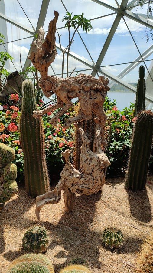 Houten rabitstructuur met cactus stock afbeelding