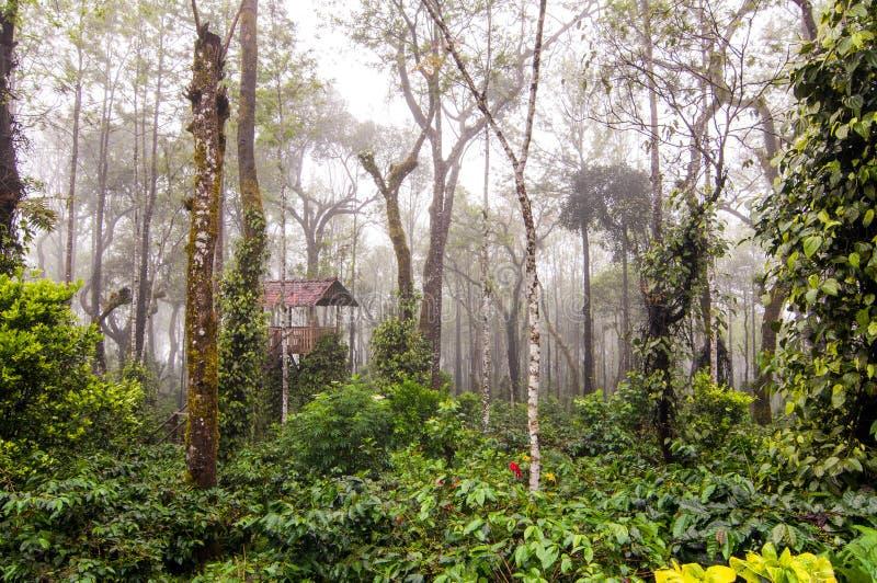 Houten richel onder bomen in een koffieaanplanting stock foto's