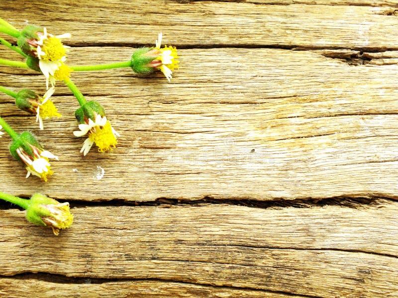 Houten ruimteachtergrond met kleine bloem stock fotografie