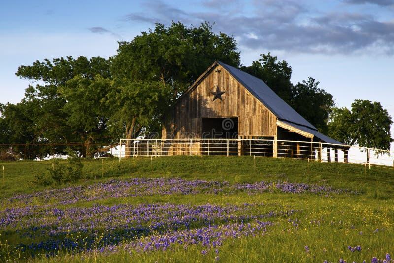 Houten Schuur op de Bluebonnet-Sleep dichtbij Ennis, Texas royalty-vrije stock foto's