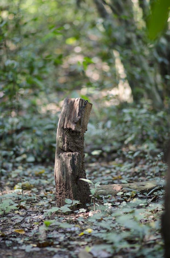 Houten staken in het bos royalty-vrije stock foto's