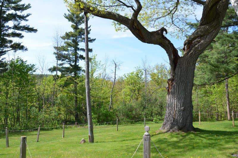 Houten steunen of polen op oude boom stock afbeeldingen