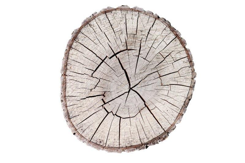 Houten stomp die op de witte achtergrond wordt geïsoleerdr Rond verminderde boom met jaarringen als houten textuur royalty-vrije stock fotografie