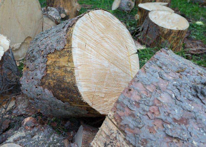 Houten stomp in het houten close-up Close-up van gesneden boomboomstam royalty-vrije stock afbeeldingen