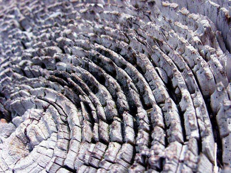 Download Houten Textuur stock afbeelding. Afbeelding bestaande uit ringen - 37345