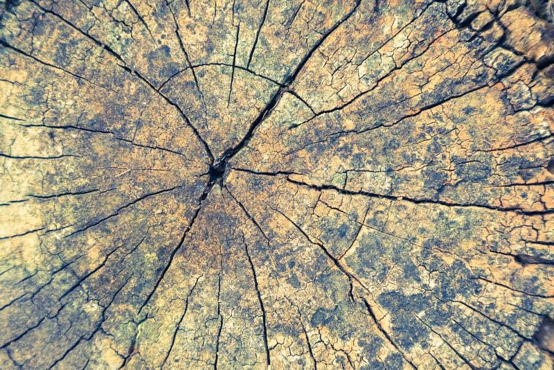 Houten textuur of houten achtergrond hout voor binnenlandse buitendecoratie en industrieel bouwontwerp royalty-vrije stock afbeeldingen