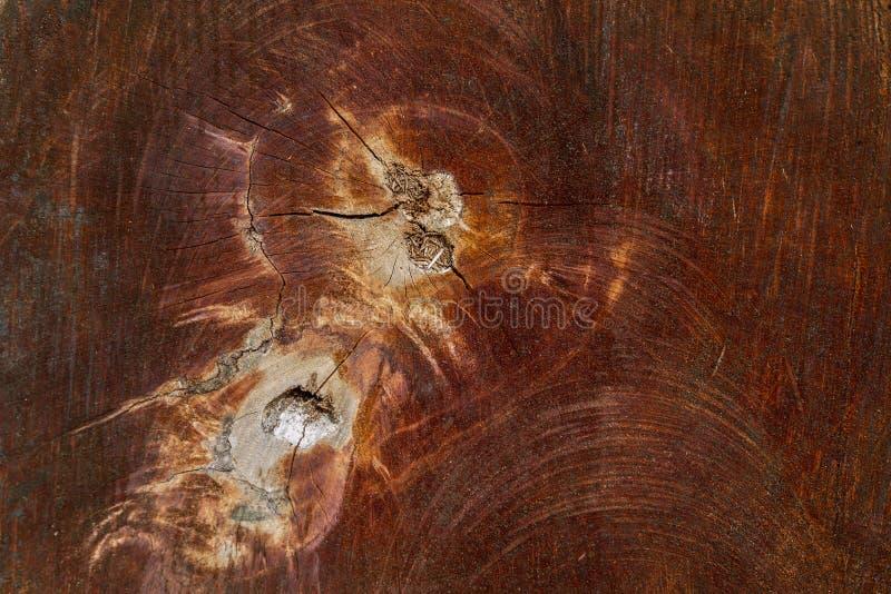 Houten textuur (bomen van bos) stock foto