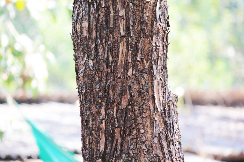 Houten textuur en achtergrond close-up van de schorstextuur van de boomboomstam royalty-vrije stock afbeelding