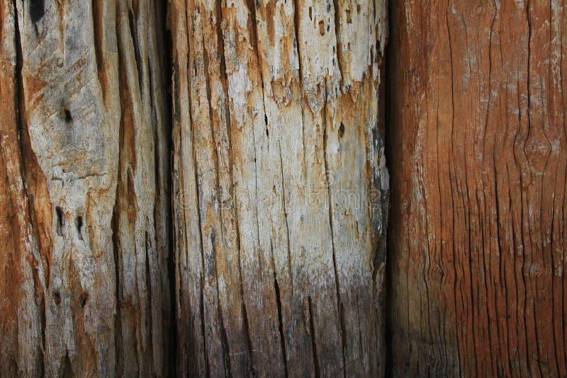 Houten Textuur Het oude logboekhout een deel van de boomstam of een grote tak van een boom was gevoerd om de muur te maken royalty-vrije stock fotografie