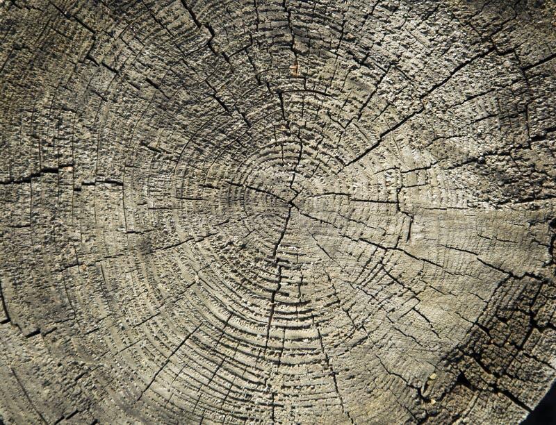 Houten textuur op een stomp stock afbeelding