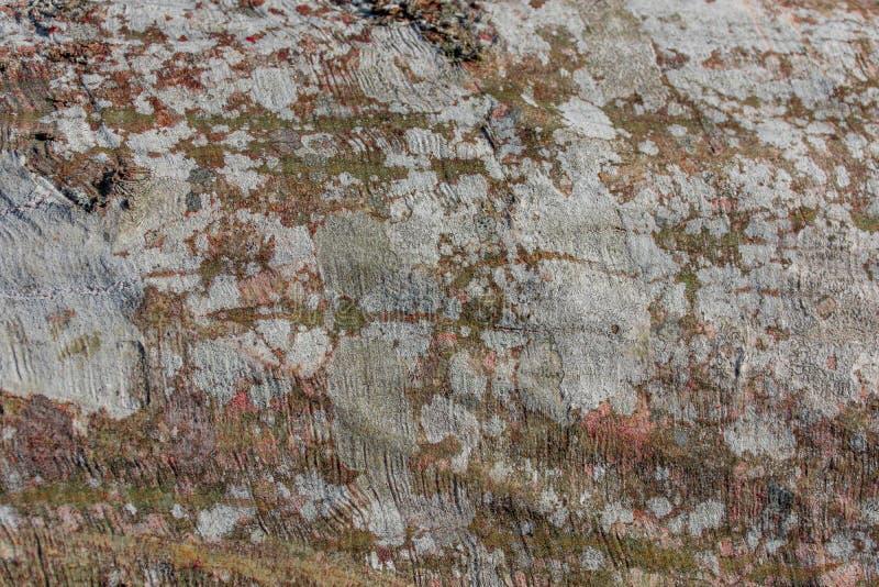 Houten textuur van een gevallen zeer kleurrijke boomkorst stock foto's