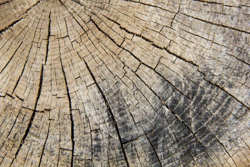 Houten textuur van gesneden boomboomstam, close-up royalty-vrije stock afbeelding