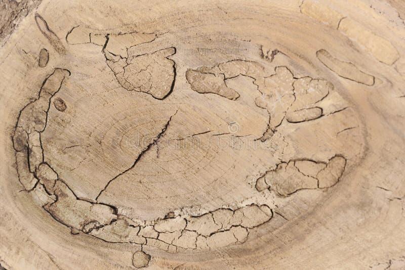 Houten textuur van gesneden boomboomstam, close-up stock fotografie